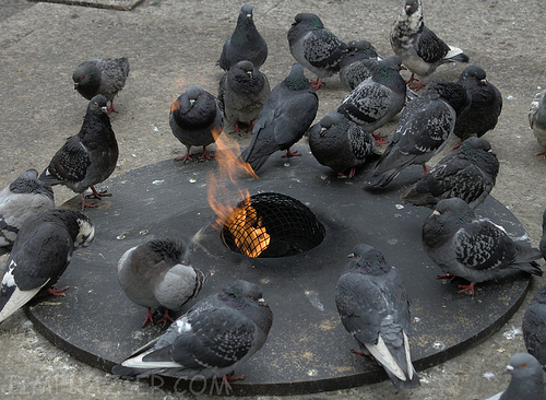 Campfire for Pigeons