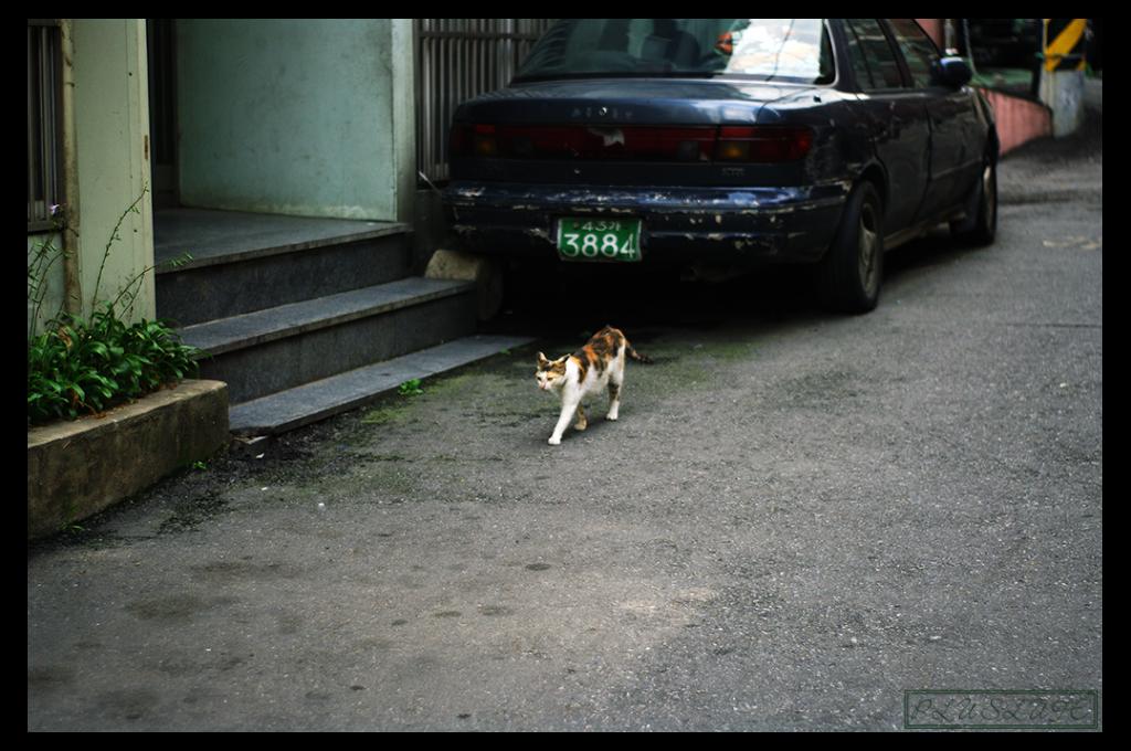 길잃은 고양이