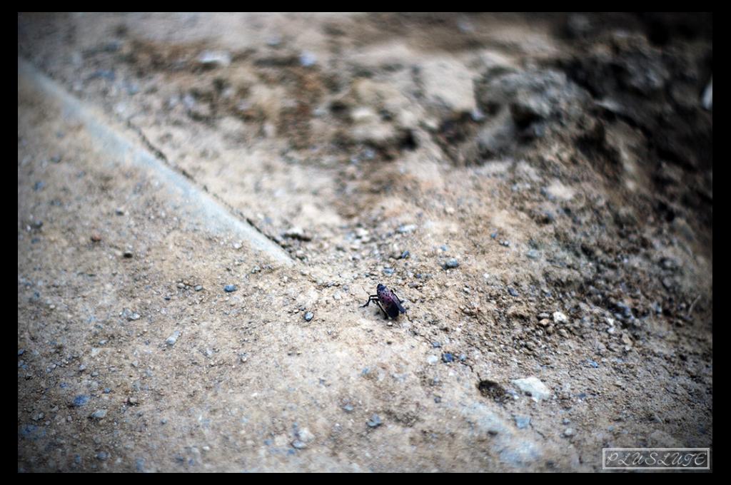 공사장을 걷고있는 벌레